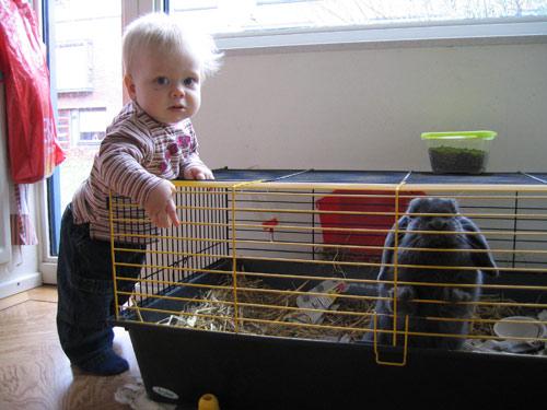 Sibren en Anna, het konijn